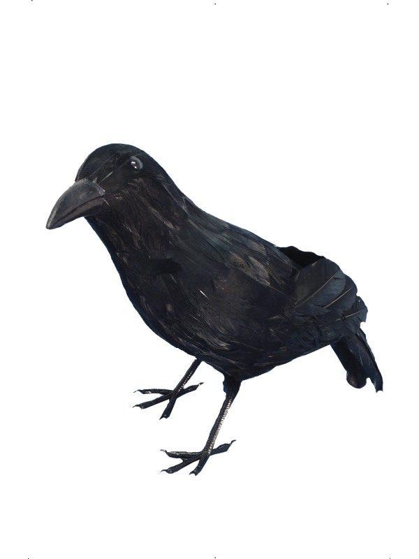 Black Crow Prop
